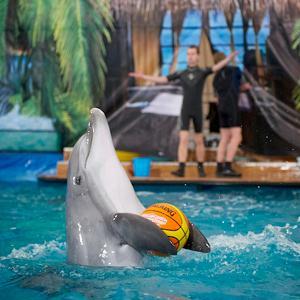 Дельфинарии, океанариумы Калининской
