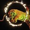 Цирки в Калининской