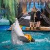 Дельфинарии, океанариумы в Калининской