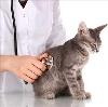 Ветеринарные клиники в Калининской